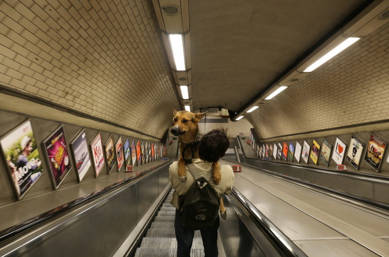 Cane in braccio al padrone su una scala mobile