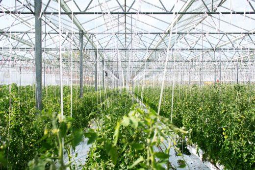 ventilazione aree di coltivazione